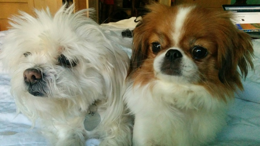 Puppy Pepe and Isabella Dog